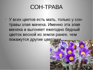 Самые точные толкования снов про цветы