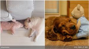 Как толкует сон о собаках современный сонник