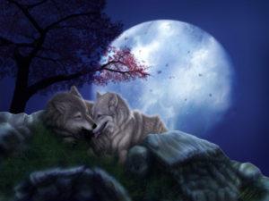 Значение сна, если ночью приснился волк