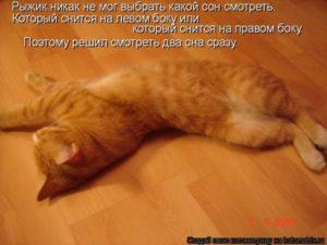 Как по соннику расшифровывается сон с котятами