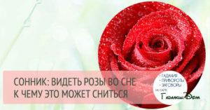 Значение по популярному соннику сна про Розы