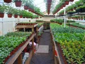 Как можно заработать на выращивании растений
