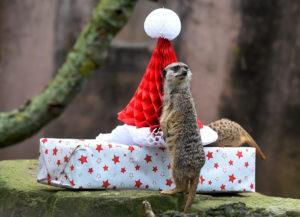 Какие животные подходят для подарка