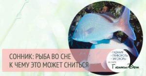 К чему снится рыба во сне, что предсказывает сонник Судьбы