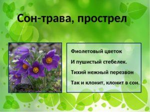 Расшифровка снов про цветы