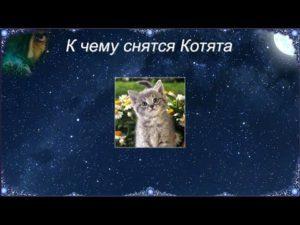 Значение к чему снятся котята по онлайн соннику