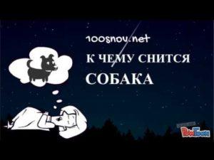 Толкование по соннику снов про опасную собаку