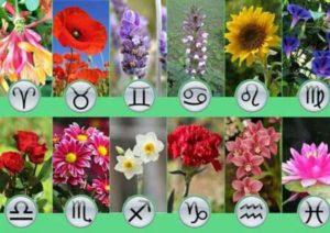 Какие цветы подходят по знаку зодиака
