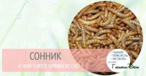 К чему по соннику снятся, что ползают черви?